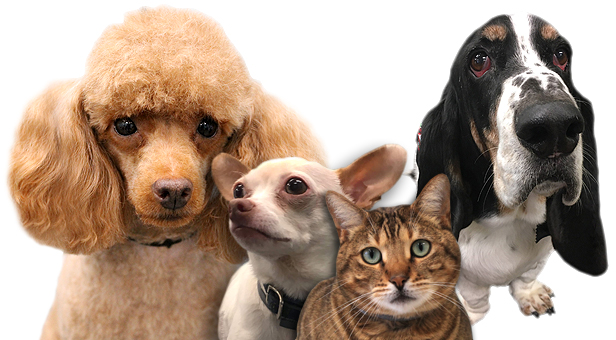 Tega Cay, SC Pet Grooming   Pet Supplies   Pet Foods   803-548-1301